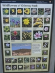 New Wildflower sign at trailhead