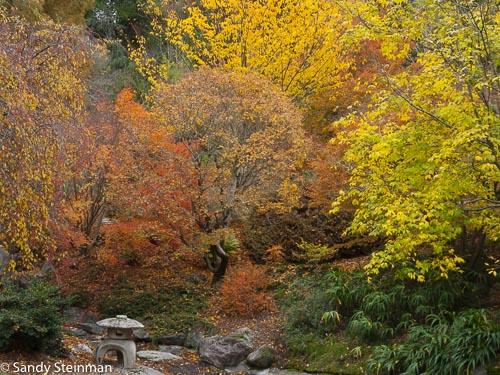 UC_Botanical_Garden-33