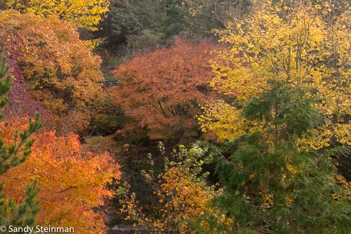 UC_Botanical_Garden_Fall_Sandy-45