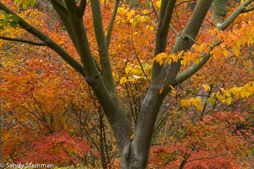 UC_Botanical_Garden_Fall_Sandy-69