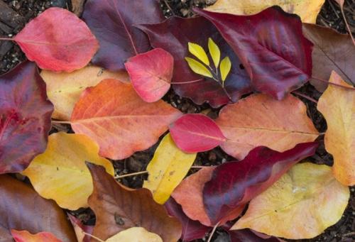Fall Leaves in My Backyard